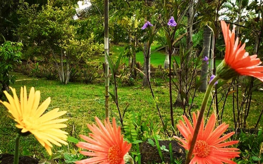 Jardin d'Ama