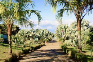 Parc des Palmiers