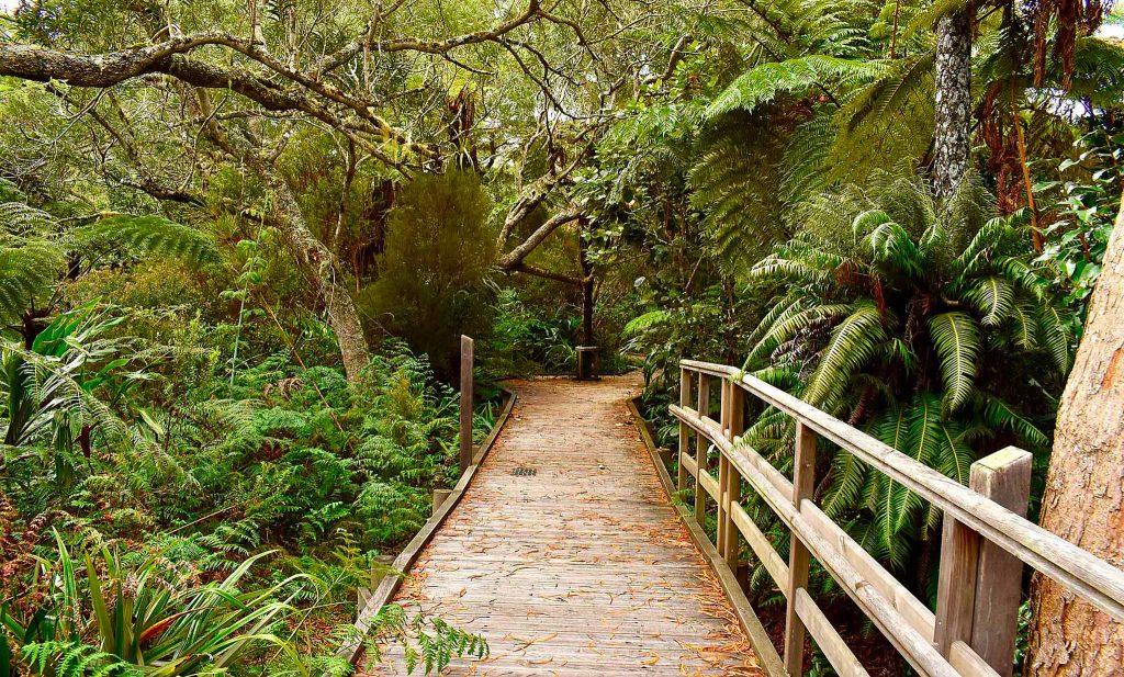 δάσος του Μπεμπούργκ