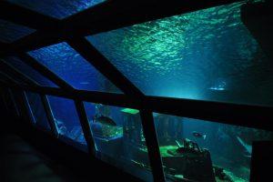 Aquarium van Réunion